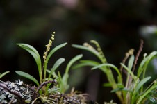 Tiny little orchids survive in the shadows.