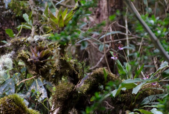 Can you find the orchids? The flora is prolific in this place.
