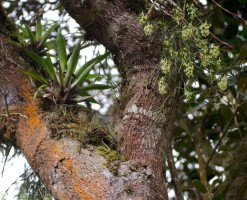 Orchids grow in different kinds of trees.