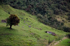 An stable and typical pasture land.