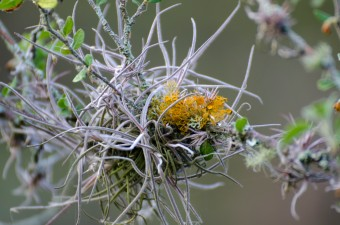 Small air plants grow on many of the bushes and trees.