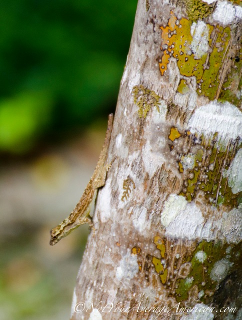 One lonely lizard... he was doing push ups on the tree!