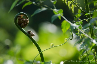 An unfurling fern in the late afternoon.