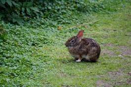 Wildlife - lots of little rabbits on the trail but they were awfully quick to disappear.