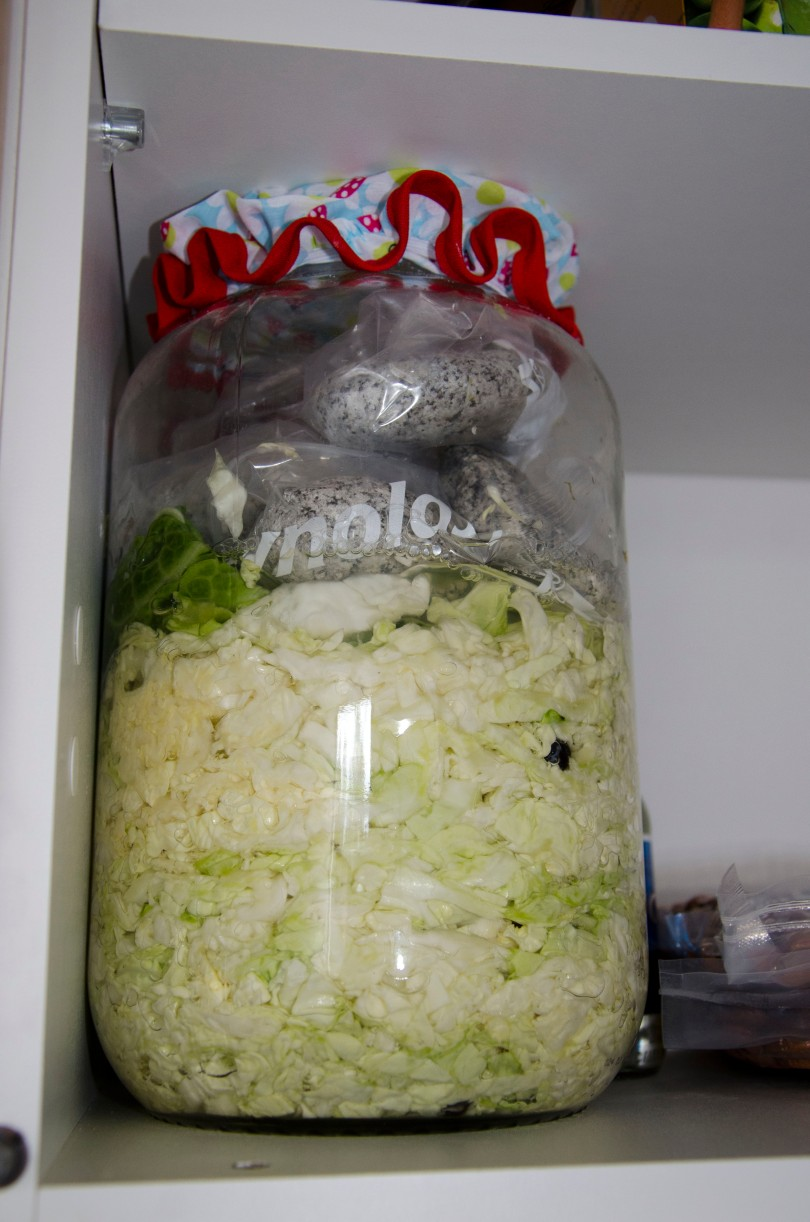 The next day, the liquid has raised up over the amount of cabbage. It's ready to sit and ferment.