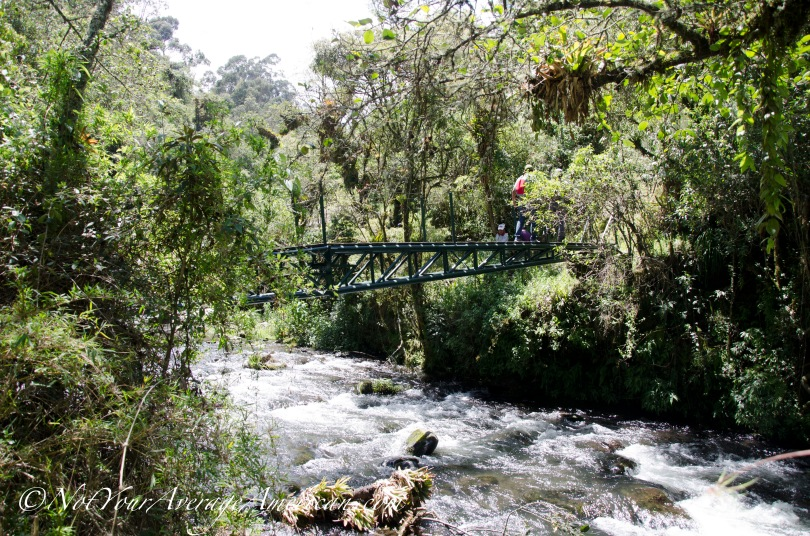 One of the many bridges crossing the Rio Pita.