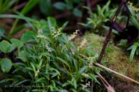Tiny orchids.