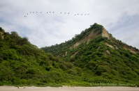 Looking at the dry tropical forest from beachside.