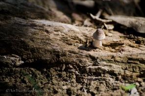 A lone mushroom tells us that rain does occur.