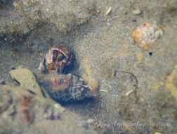 A hermit crab tussle.