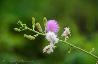 A single bubble-gum pink blossom