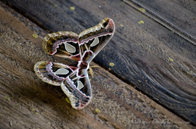 A moth found on the open porch.