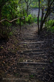 Looking down on the steps that take you to the forest trail.