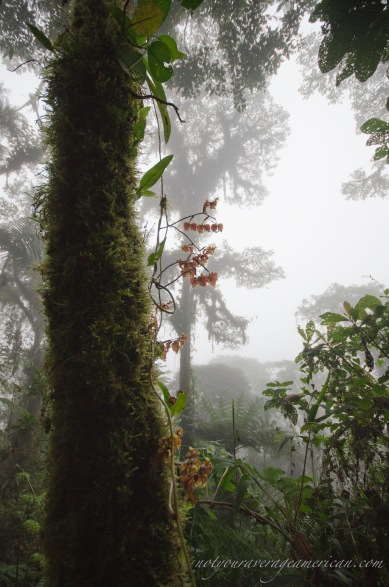 A spray of orchids in the afternoon gloom of cloud forest.