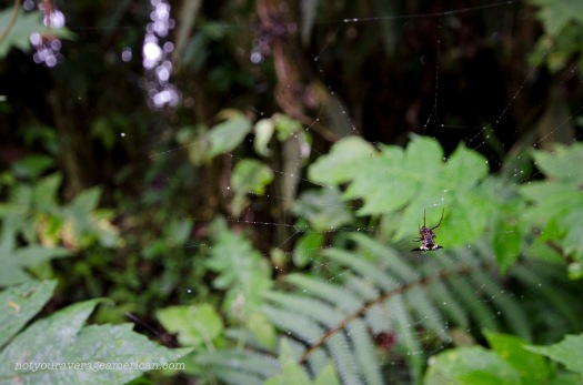 Itsy, bitsy, spider.
