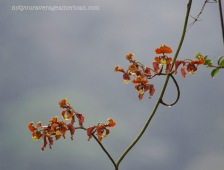 Orchids hanging from the canopy.