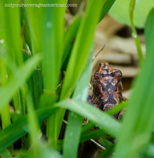 Frogs can be hard to find but it's not impossible.